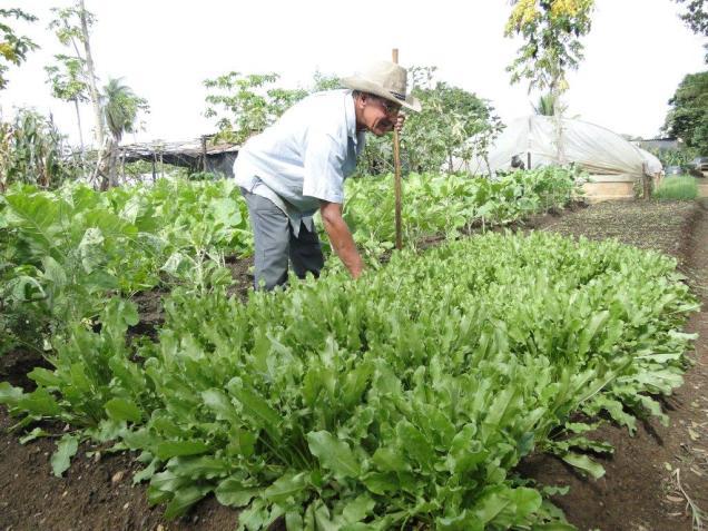 Cultivo orgânico de hortaliças será um dos temas abordados