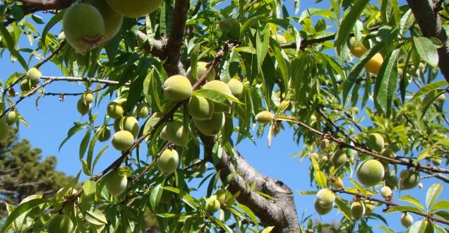 Encontro abordou fruticultura de Montanha. Foto: Mariana Penaforte - EPAMIG