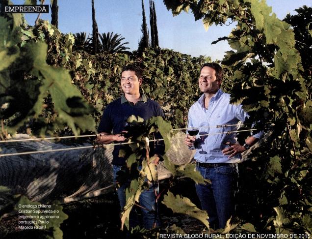 Tecnologia de dupla poda da videira impulsionou a produção de vinhos finos de qualidade no sudeste do Brasil