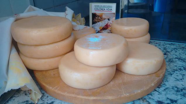 Foto: Programação vai destacar qualidade e segurança na produção do queijo minas artesanal. Foto: Daniel Arantes - EPAMIG