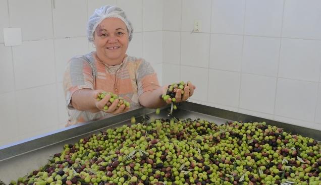 Olivicultora Zilda Maciel - produção de azeitona da Fazenda Paiol Velho - extração 2016. Foto: Pedro Moura - EPAMIG