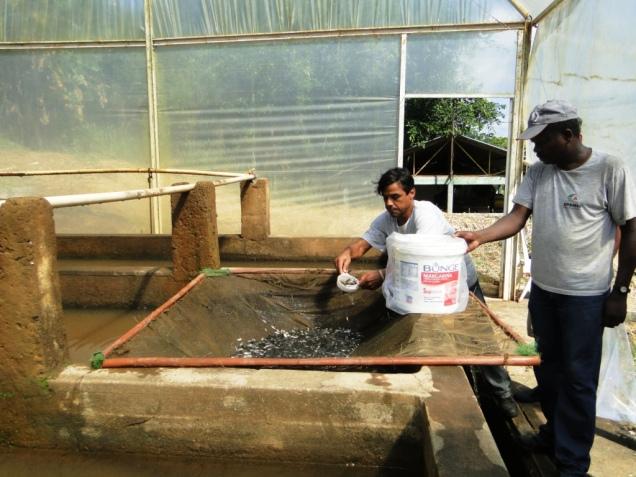 EPAMIG prepara alevinos para peixamento do rio Pomba