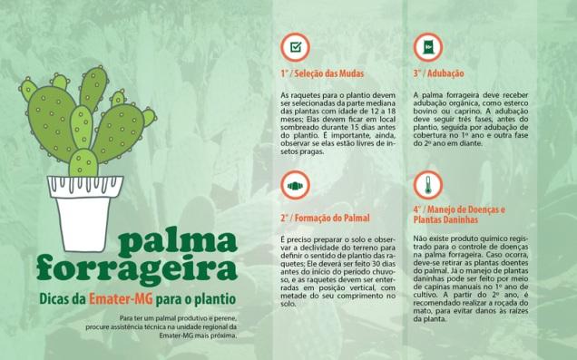 ARTE COMO PLANTAR PALMA FORRAGEIRA