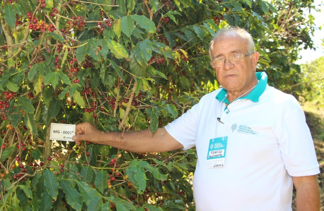img_9199-pesquisador-antonio-pereira-desenvolve-trabalho-de-selecao-de-progenies-no-banco-de-germoplasm-do-cafe-que-ja-resultou-no-lancamento-de-varias-cultivares