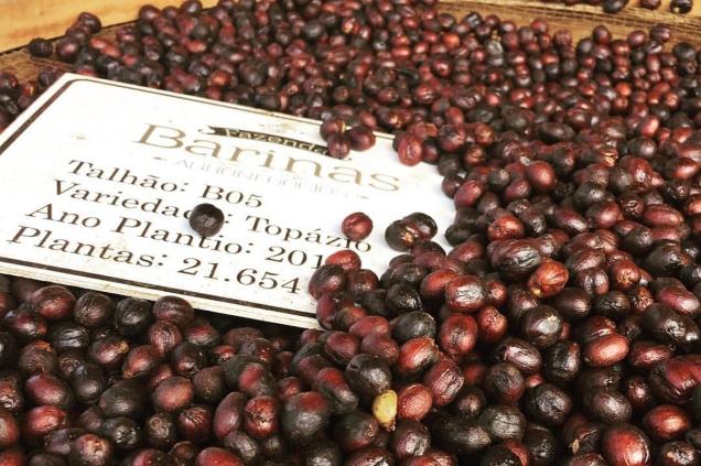 cultivar-topazio-produzida-em-araxa-segundo-lugar-na-categoria-cafe-natural-do-premio-regiao-do-cerrado-mineiro-foto-divulgacao-barinas