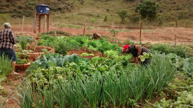 wa0042-hortas-circulares-em-santa-rita-do-itueto-complentaram-renda-e-melhoraram-alimentacao-de-agricultores-familiares-foto-elizete-rodrigues