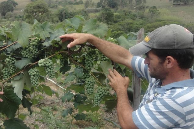 dsc01052-vando-comemora-a-qualidade-dos-frutos-em-funcao-do-microclima-favoravel-em-carandai