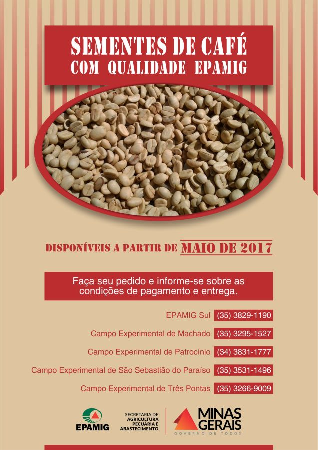 sementes-de-cafe-epamig