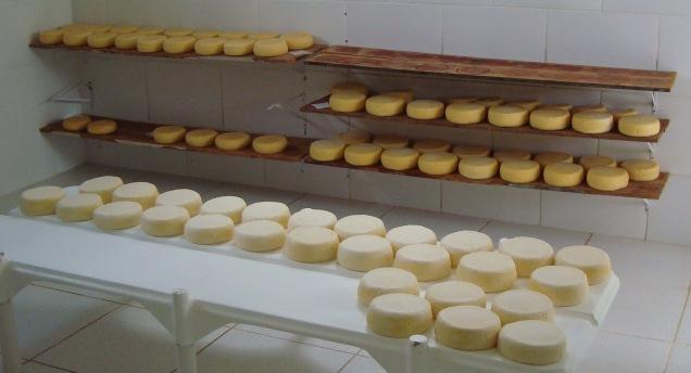 7808 - Queijaria em Tiradentes investe em padronização na fabricação do queijo minas artesanal. Foto Lúcia Resende