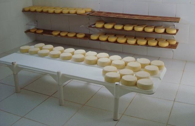 7808 - Queijaria em Tiradentes investe em padronização na fabricação do queijo minas artesanal. Foto Lúcia Resende.jpg