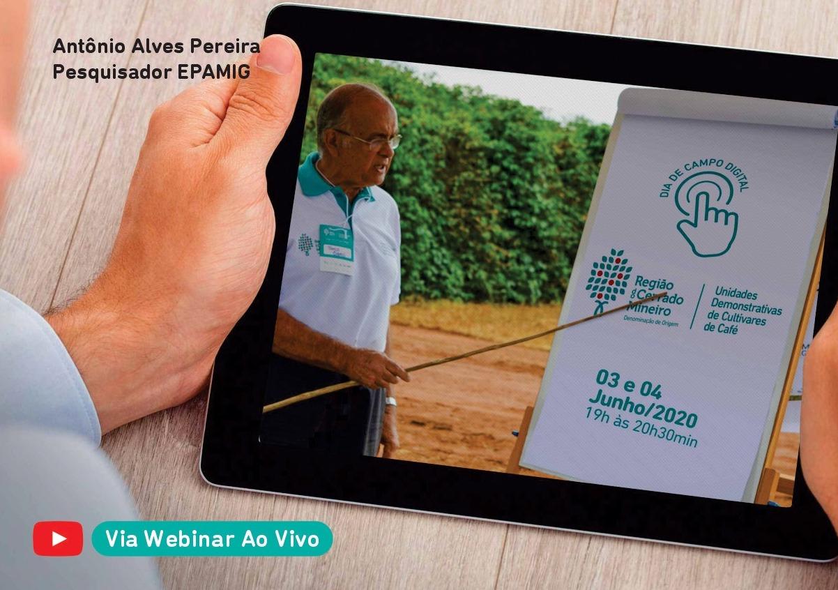 Dia de Campo Virtual apresenta novos resultados de projeto que avalia cultivares de café no Cerrado Mineiro