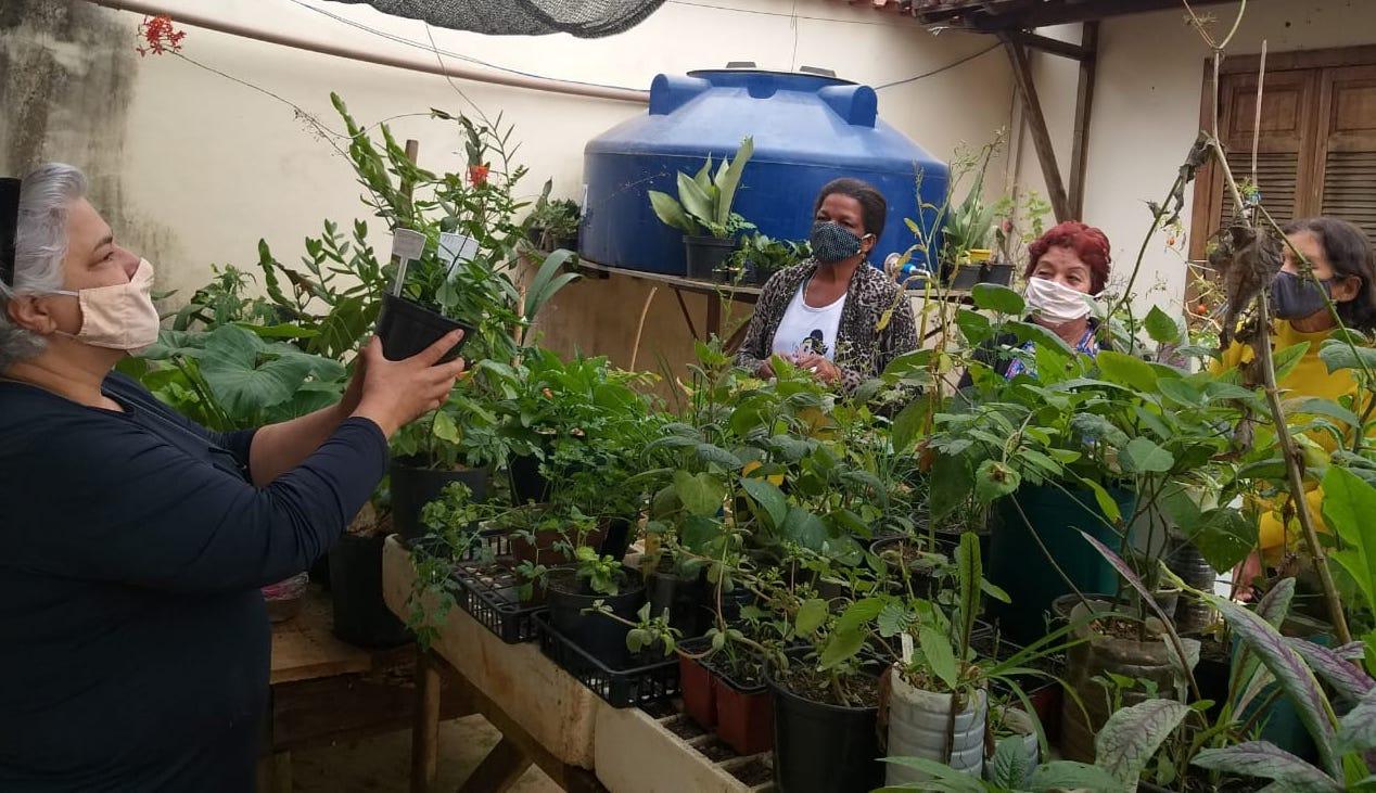 Moradores do Campo das Vertentes aprendem a cultivar hortaliças Pancs em vasos