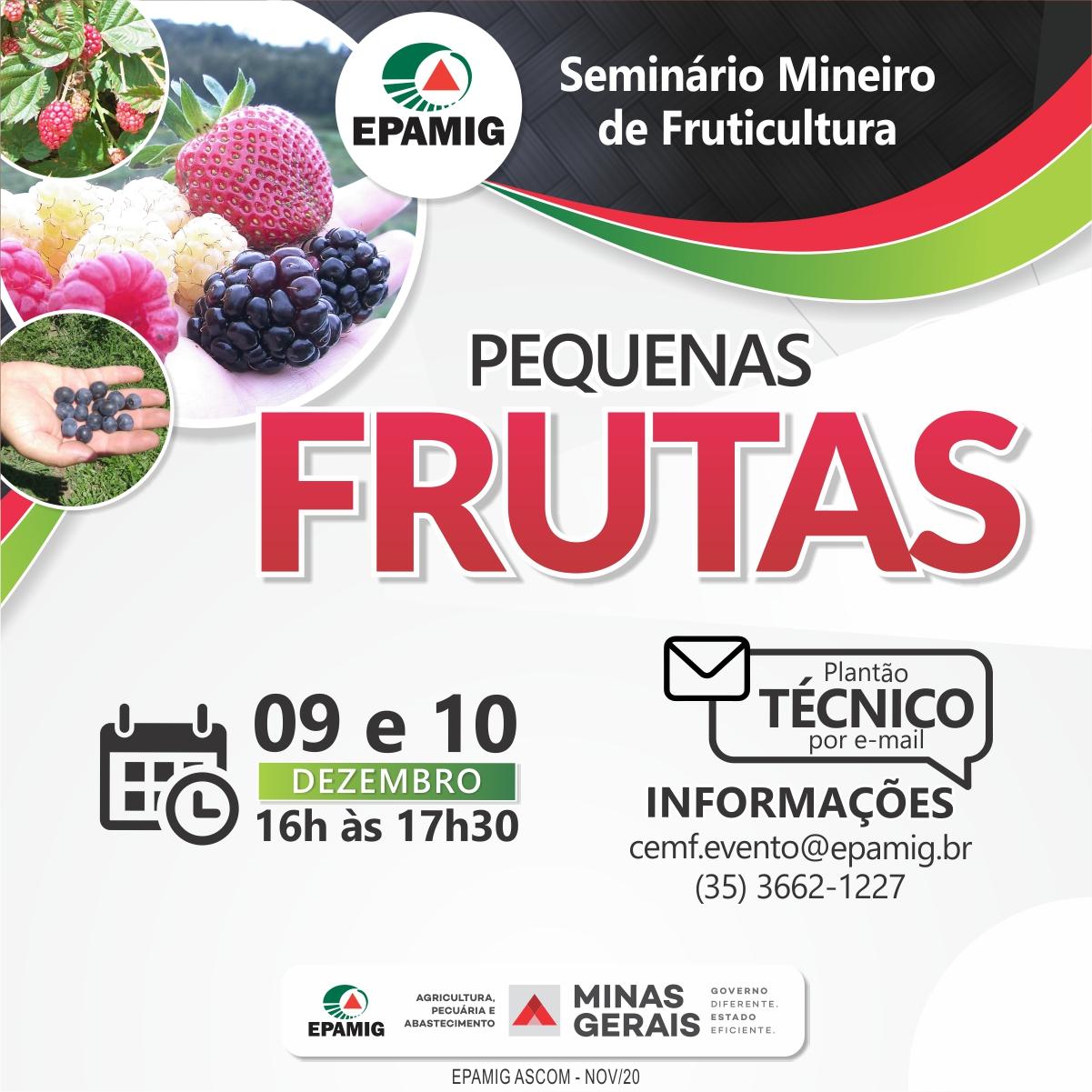 Evento online destaca o cultivo de pequenas frutas