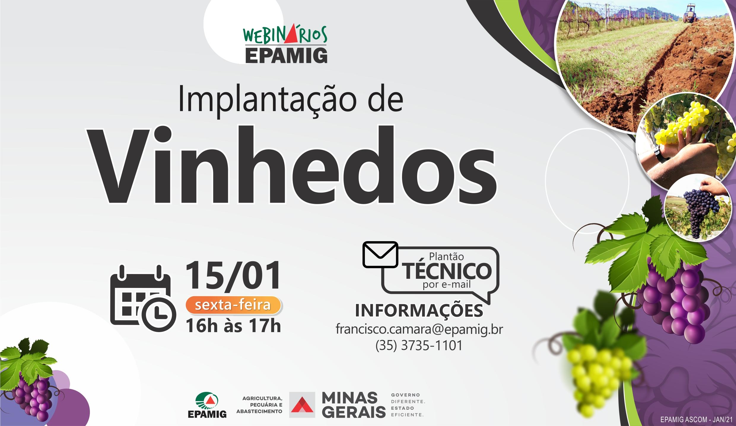 EPAMIG realiza webinário gratuito sobre implantação de vinhedos